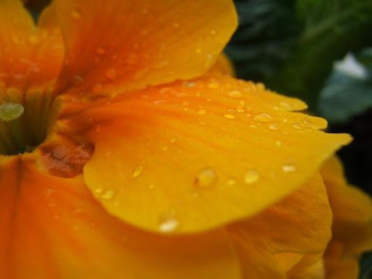 Lacrime di pioggia di breizh