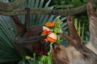 Photo: a BAT and a sloth
