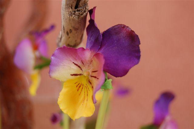 prima fioritura di decacri