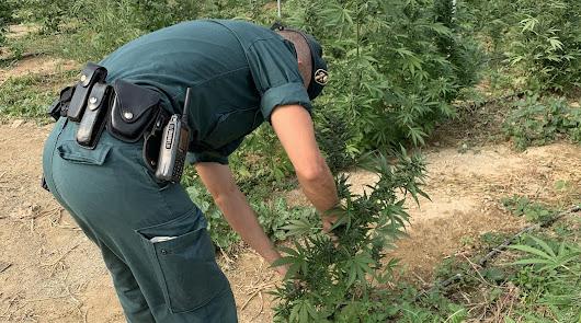 Un agente, en el invernadero donde se cultivaba marihuana.