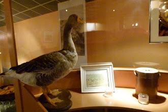 Photo: Musée du foie gras de Bénéjacq