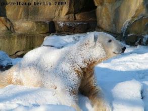 Photo: Schneebaerchen Knut :-)