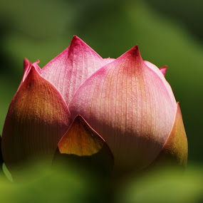 by Juanito Bumactao - Nature Up Close Flowers - 2011-2013