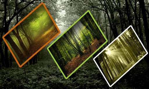 Natural Forest Photo Frame