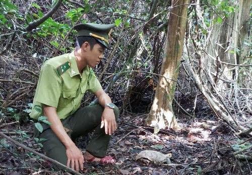 Phong Nha Kẻ Bàng, động vật hoang dã về tự nhiên