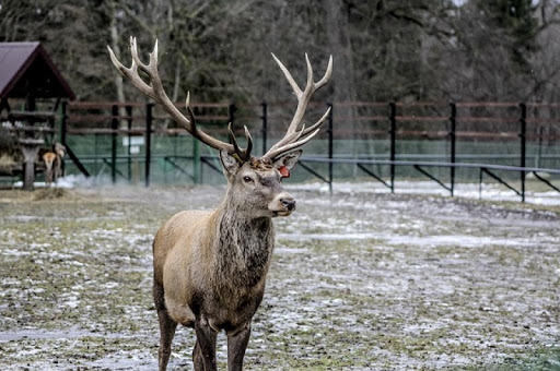 Elk Antler Wallpapers HD FREE