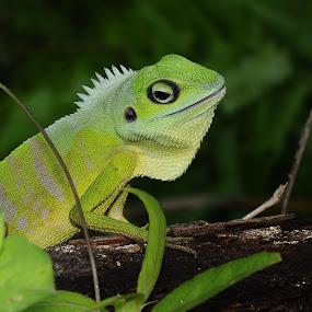 by Madihi Ata - Animals Reptiles