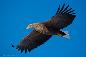 Photo: Eagle Eye - silly title, I know, but when you see this displayed 5 foot wide in an exhibition, you'll understand.