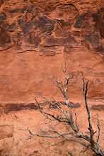 Photo: Organic: Tree and wall near Partition Arch, Arches National Park. Bigger and Prints: http://lagemaatphoto.smugmug.com/Landscapes/National-Parks/Arches-National-Park/3876776_phTb5j#!i=2385927906&k=LsHjb8z&lb=1&s=A