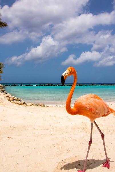 Flamingo Beach, Renaissance Island