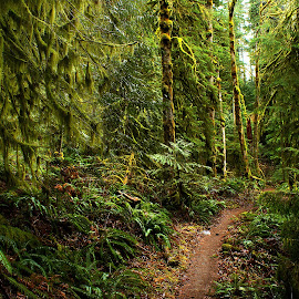 Path in the woods by Gaylord Mink - Nature Up Close Trees & Bushes ( nature, lichens, path, trees, woods )