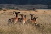 Национальный парк De Hoge Veluwe