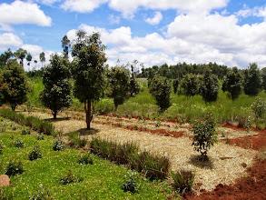 Photo: Agroforesterie, illustration