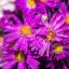 pretty purple by Empty Deebee - Flowers Flower Buds ( water drops, purple, flowers )