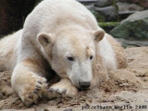 Photo: Knut mit Sandnase auf dem Sandhaufen ;-)