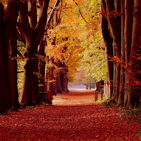 Nice forest lane in Autum colors! by Gert de Vos - Landscapes Forests