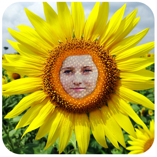 Sunflower Photo Face effects 攝影 App LOGO-硬是要APP
