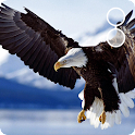 live eagle wallpaper icon
