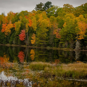 Fall 2018 NE Wisconsin by Michael Haagen - Landscapes Waterscapes ( fall, color, reflection, leafs, water,  )