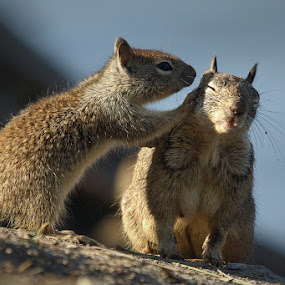 by Christopher Payne - Animals Other Mammals ( whisper, clean, ground, brown, squirrel )