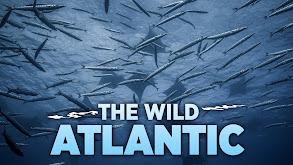 The Wild Atlantic thumbnail