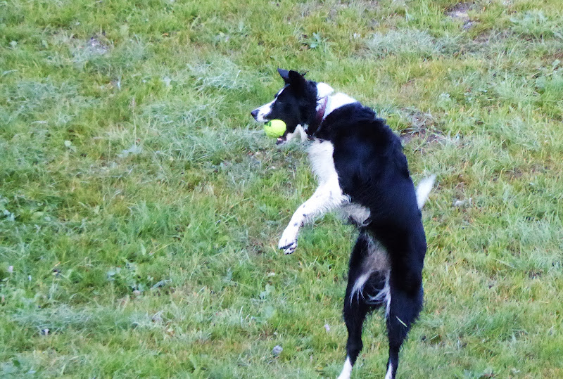 ...ed io gioco con  la pallina gialla!! di Piera