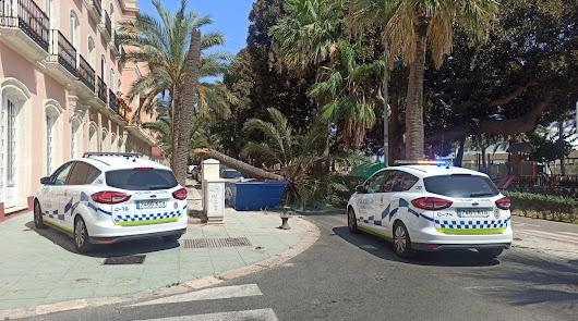 La caída de una palmera en el Nicolás Salmerón obliga a desviar el tráfico