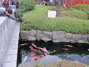 Photo: Koi pond