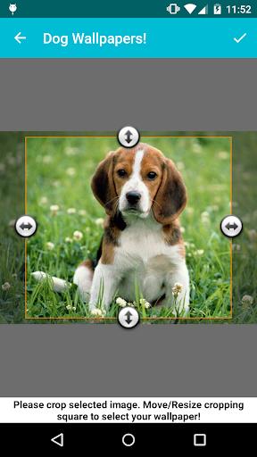 dog wallpapers! screenshot 3