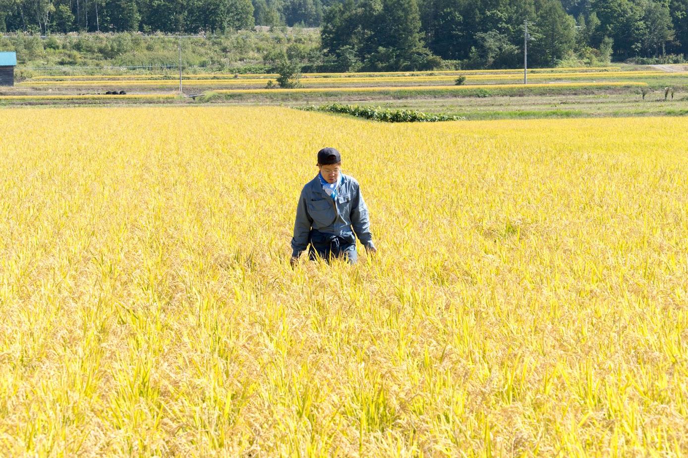 圃場を走って、稲穂の濡れ具合を確認します