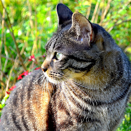 Outside Cat by Bill      (THECREOS) Davis - Animals - Cats Portraits ( #garden, #cat, #sitting, #outdoors, #sideview,  )
