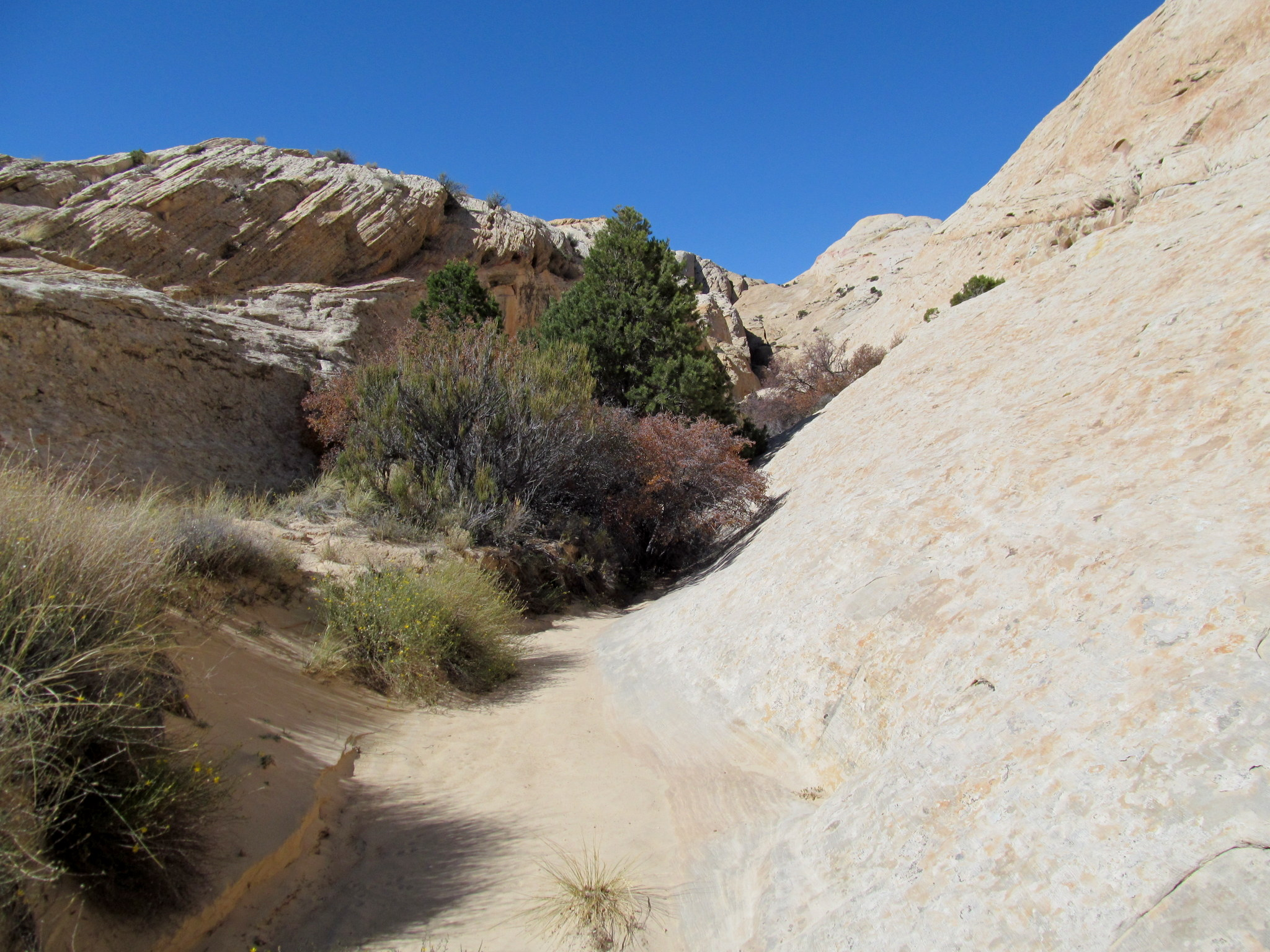 Photo: Another small canyon choked with brush and trees