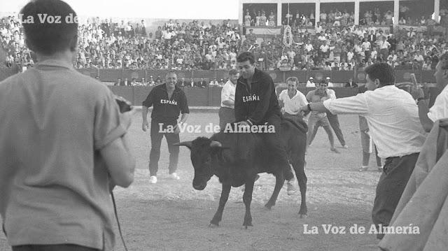 Hasta hubo toros en la plaza de Berja. En la fotografía, un componente de la selección española, montando un becerro.