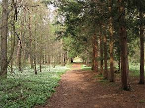 Photo: Arboretum w Rogowie