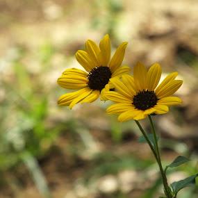 Yellow Love ! by Debartist Lightpainter - Flowers Flowers in the Wild