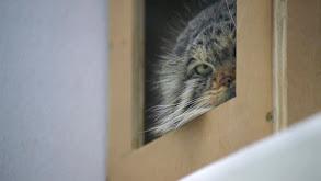 Grumpy Cats' New Digs thumbnail