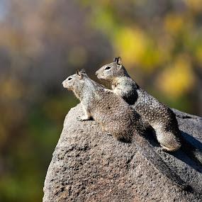Partner for life  by Alex Sam - Animals Other ( chipmunk, squirrel, animal )
