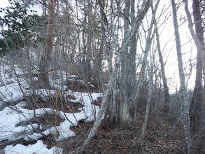 雪解けで藪が五月蝿く