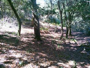 Photo: Typical floor under oaks.