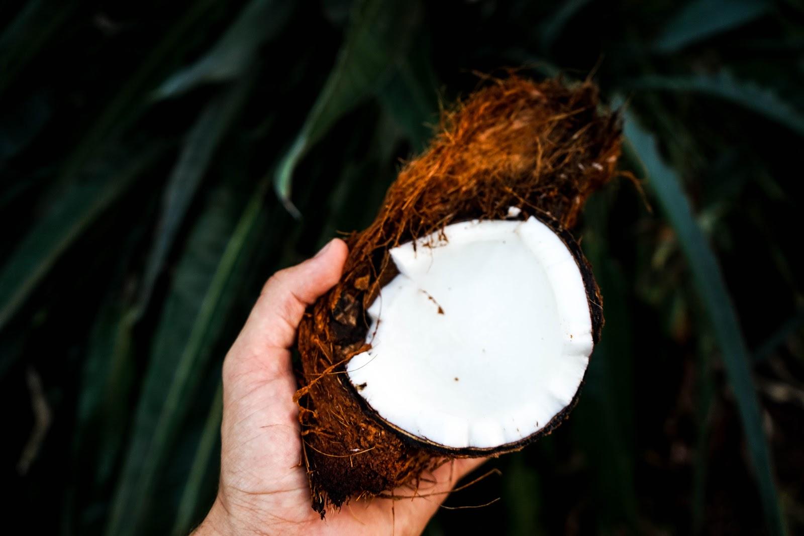 Ist Kokosfett ein transfett?