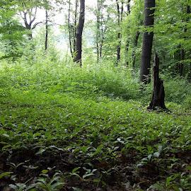 Зелено by Georgi Kolev - Nature Up Close Trees & Bushes ( гора., храсти., зелен., светлина., дървета. )