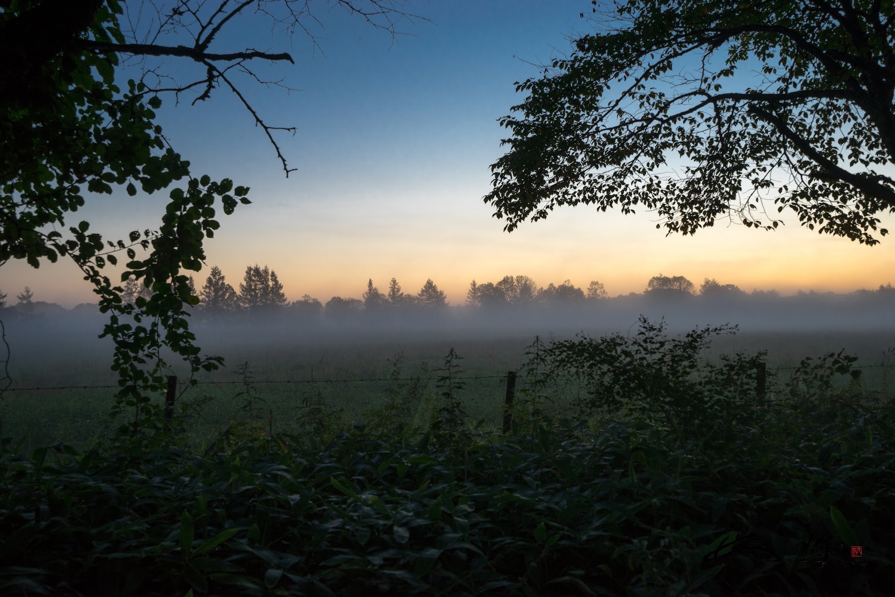 朝靄に包まれた平原を通り抜けて。。。