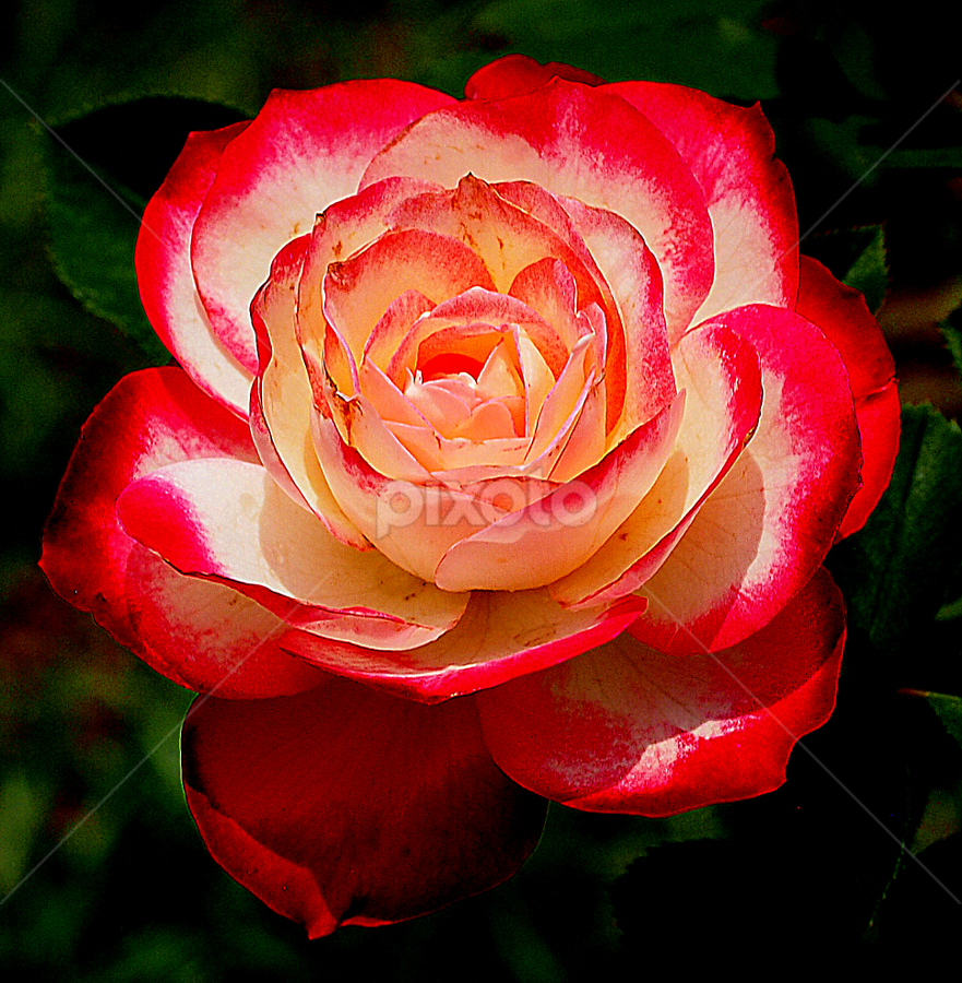 by Ajar Setiadi - Nature Up Close Flowers - 2011-2013