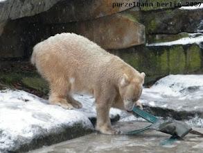 Photo: Das Aussie Teil muss doch aus dem Eis zu bekommen sein ;-)