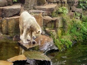 Photo: Aber Knut hat da eine Idee ;-)