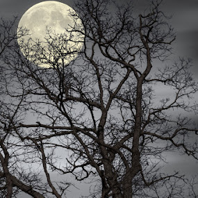 Tree and Full Moon by Eugene Linzy - Nature Up Close Trees & Bushes ( moon, tree, night, full moon, branches )