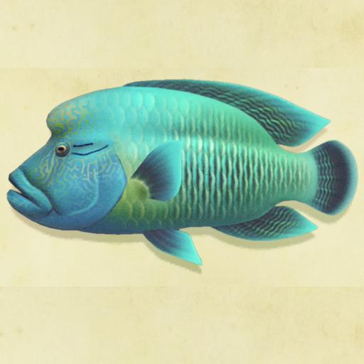 種類 あつ 森魚