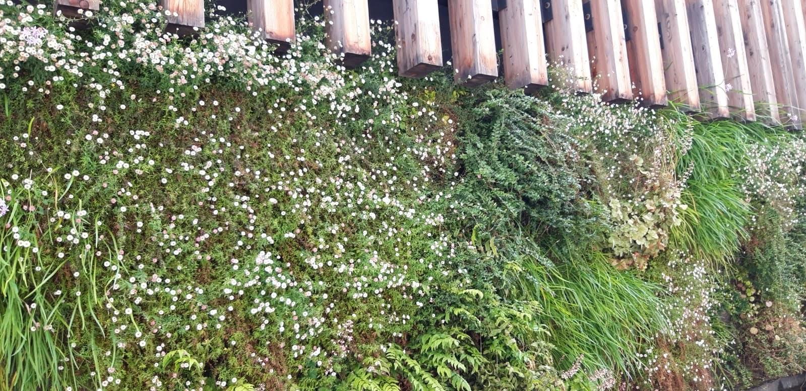 Diferentes especies de plantas en el jardín vertical de Bilbao