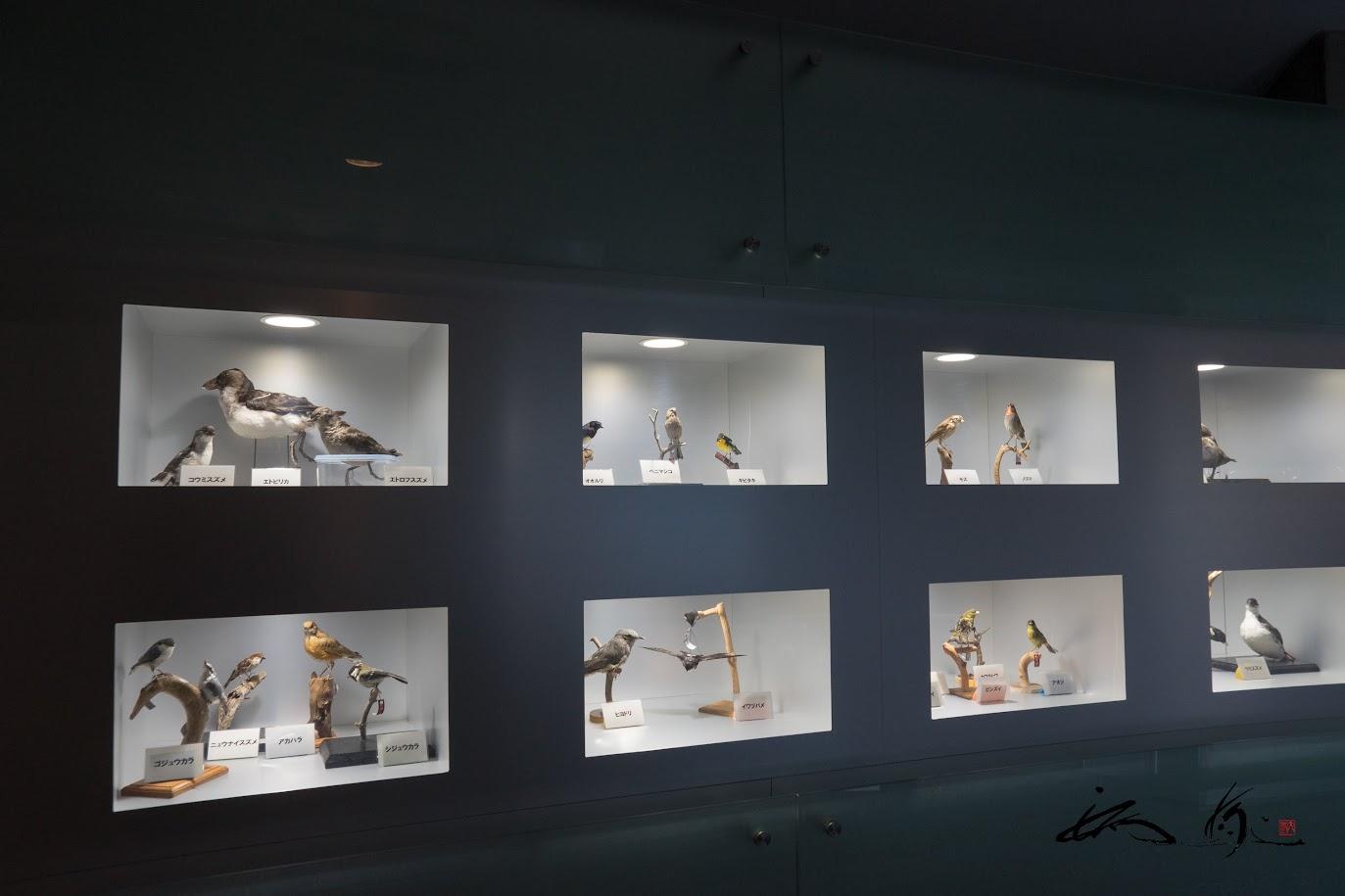 鳥の剥製展示