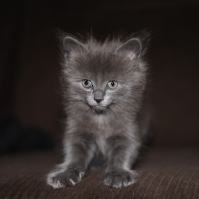 by Deanna Clark - Animals - Cats Kittens (  )